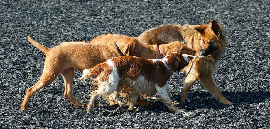 Dog Day Care Renfrewshire